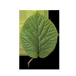 Leaf-1-90¯-G15-150px