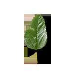 Leaf-3-90¯-G18-150px