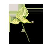 Leaf-5-90¯-G27-150px